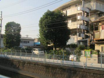 特別養護老人ホーム大森(クスノキ)
