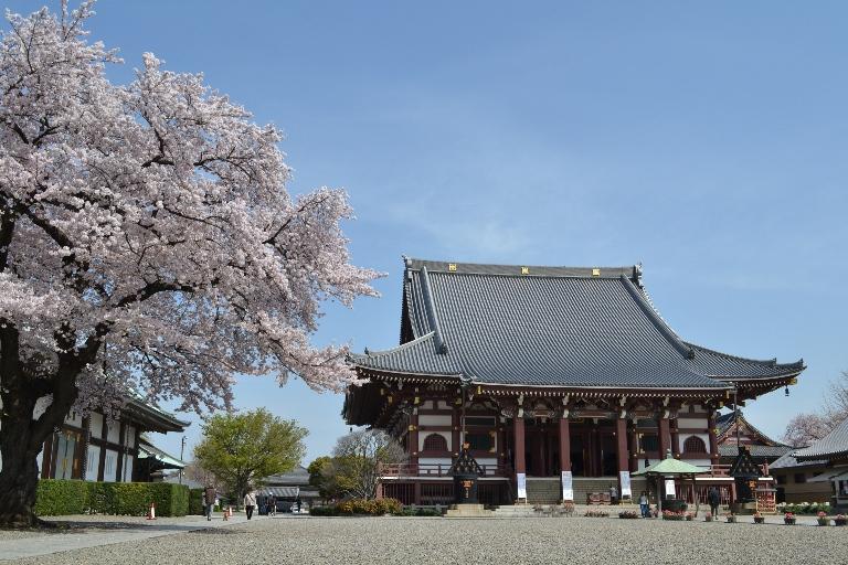 池上本門寺桜