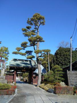 大坊本行寺(マツ)